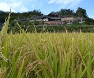 Gyeongju: cel mai bun timp pentru a merge