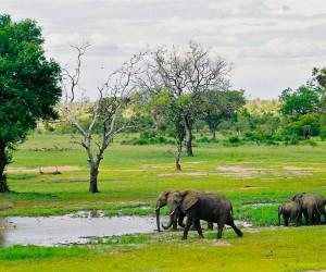 Parc Kruger: cel mai bun timp pentru a merge
