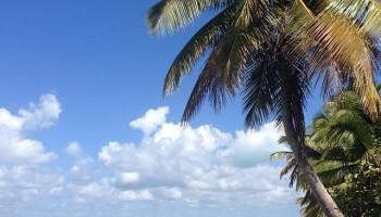 Insula Saona
