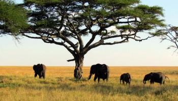 Parcul National al Nigerului de Sus