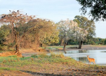Parcul Național South Luangwa