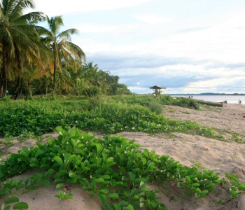 Guiana Franceză
