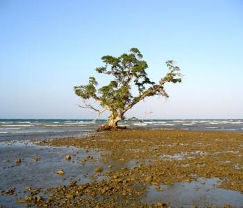 Timorul de Est