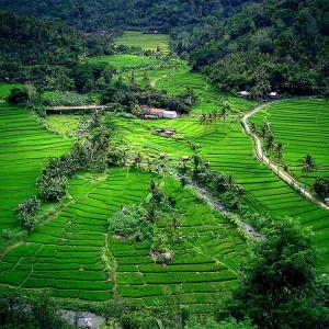 Bali / 1620